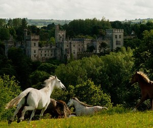 castle, horses, and ireland image