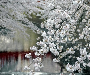 flowers, japan, and nature image