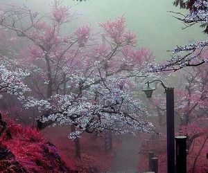 nature, japan, and flowers image