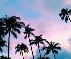 journey, palms, and sky image
