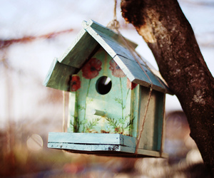 bird, vintage, and nature image