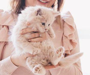 animals, cat, and love image