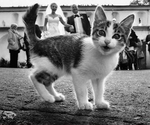 cat, wedding, and cute image