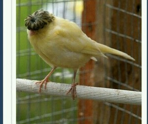 bird, funny, and awesome image