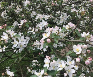 blossoms, spring, and white image