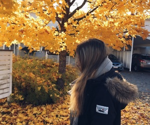 autumn, autumn colors, and hair image