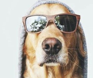 animals, cool, and puppies image
