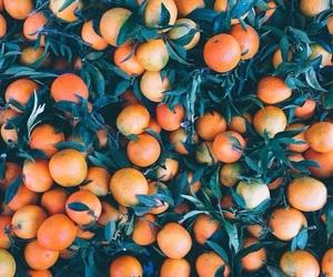 orange, color, and fruit image