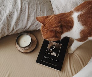 cat, bed, and book image