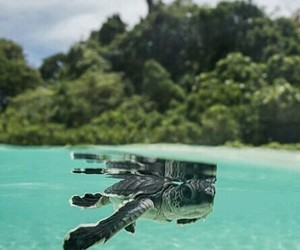 beach, summer, and turtle image