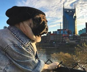 life, luck, and pugdog image