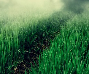 background, grass, and green image
