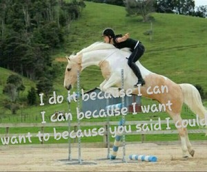 equestrian, free, and horse image