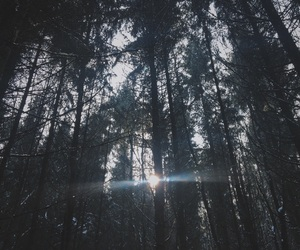 dark, forrest, and photography image