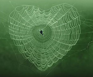 heart, spider, and web image