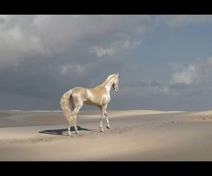 beautiful, turkmenistan, and breed image