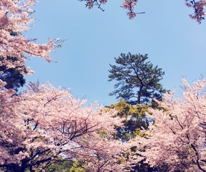 spring and 桜 image