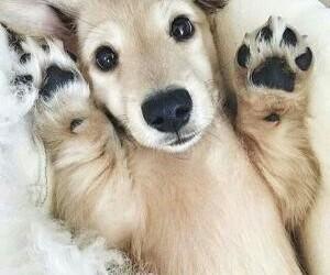 animals, dog, and doggo image