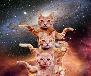 cat, space, and galaxy image