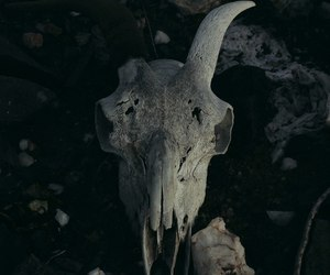 skull, animal, and dead image
