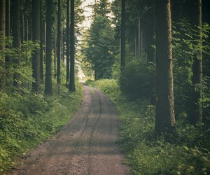 forest, green, and road image