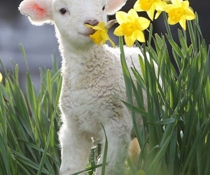lamb, flowers, and spring image