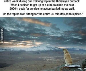 awesome, dog, and friend image