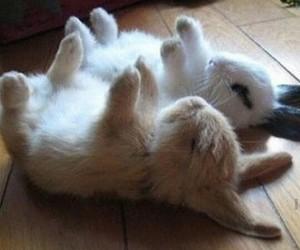 rabbits and cute image