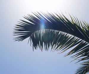 holiday, palm, and palm tree image