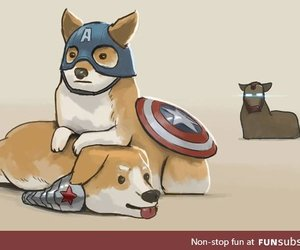 awesome, civil, and corgi image
