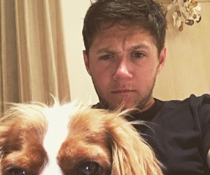 niall horan, one direction, and dog image