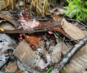 babies, mushrooms, and nature image
