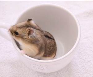 adorable, hamster, and pretty image