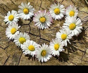 heart, flowers, and daisy image