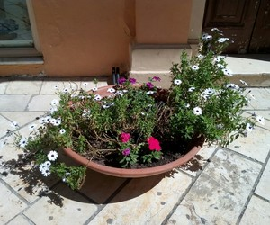 flowers, Greece, and spring image