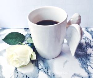 beautiful, rose, and white rose image
