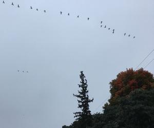 autumn, bird, and greysky image