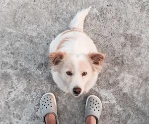 blowjob, colour, and dog image
