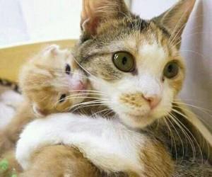 animal, awesome, and baby image