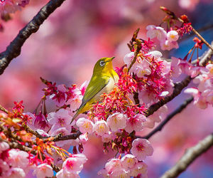 bird, blossom, and flowers image