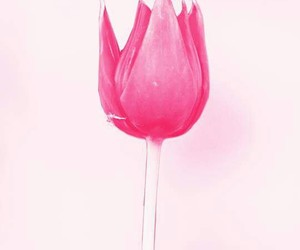 pink, rosa, and tulip image