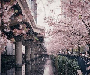 japan, pink, and beautiful image