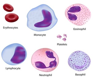 biology, blood, and cell image