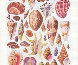 brown, colors, and shells image