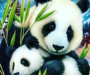 panda, animals, and bear image