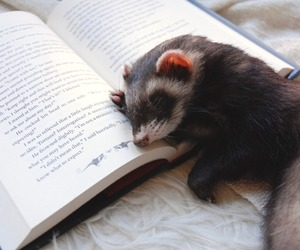 books, ferret, and racoon image