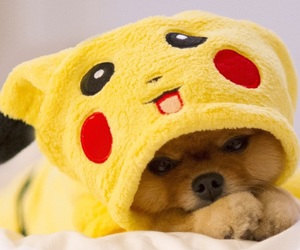 dog, puppy, and pikachu image