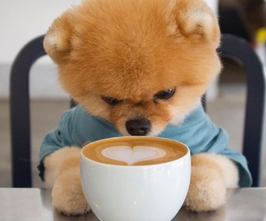cappuccino, dog, and puppy image