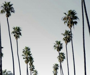 palm trees, california, and palms image