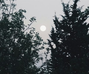 moon, trees, and instagram image